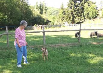 Langage canine wakama 1