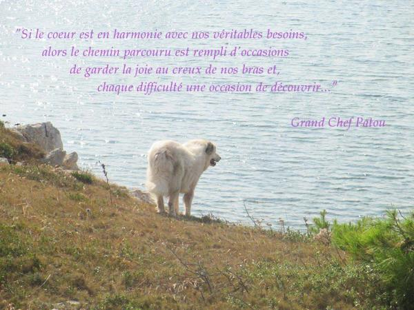 Patou citation