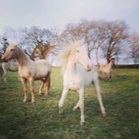 Sagesse equine