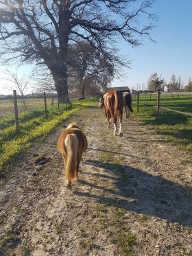 Barth chevaux