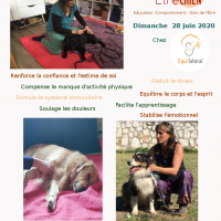 Com massage seule equilateral