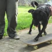 educateur canin etre chien education canine cours collectifs massage soins