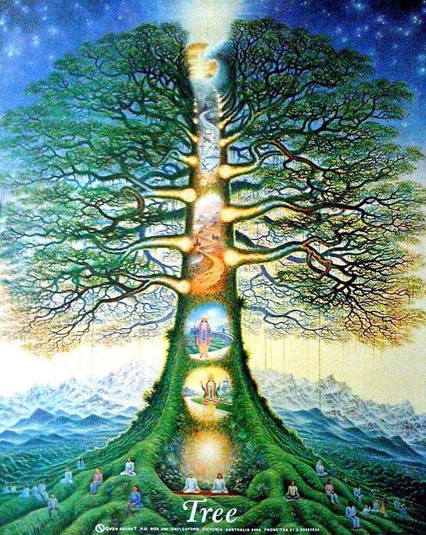 Tree of life australia
